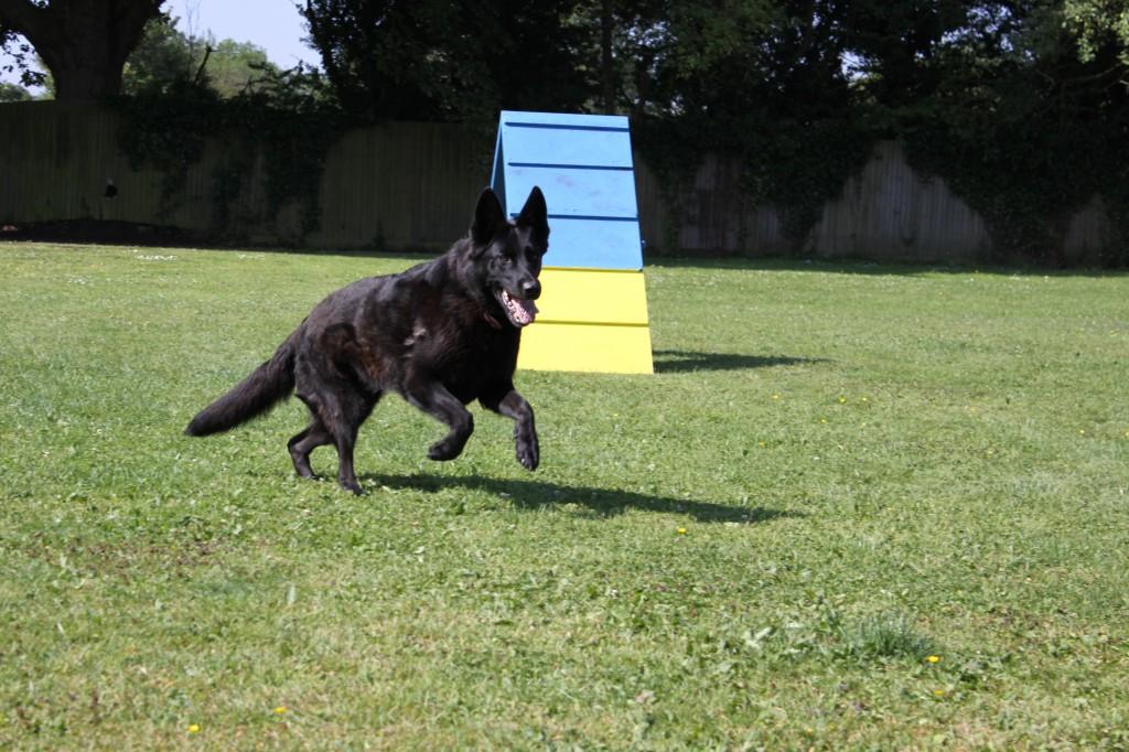 Dog Kennels Buckinghamshire